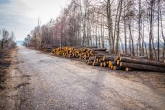 Industrial planned deforestation in spring fresh green alder lies on the ground along the highway royalty free stock photo