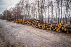 Industrial planned deforestation in spring fresh green alder lies on the ground along the highway stock photo
