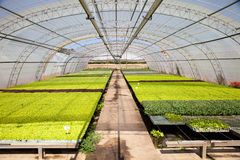 Industrial plants cultivation Stock Images