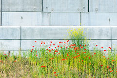 Industrial poppies Stock Photos