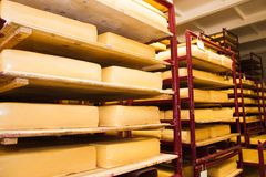 Industrial production of hard cheeses. Cheese is very tasty and healthy product Royalty Free Stock Photos