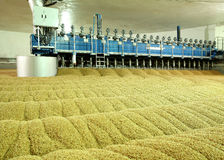 Industrial production of malt. A huge vat. Of malt. Germination of wheat. Drying oats. Barley sprouts Stock Photos