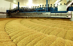 Industrial production of malt. A huge vat. Of malt. Germination of wheat. Drying oats. Barley sprouts Royalty Free Stock Photo