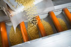 Industrial production of pastaon automated food factory Stock Photography
