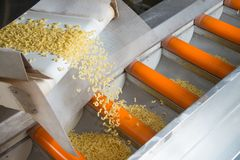 Industrial production of pastaon automated food factory Royalty Free Stock Photography