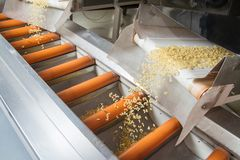Industrial production of pastaon automated food factory Stock Photos