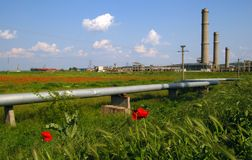 Industrial ruins, tubes & flowers field Stock Images