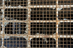 Industrial window wire mesh Royalty Free Stock Image