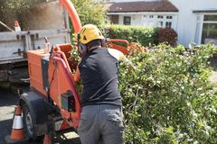 Industrial Wood Chipping Machine. Male operative loading branches into an industrial wood chipping machine stock image