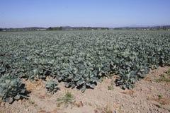 Industrially fullvuxna jordbrukskördar Royaltyfri Foto