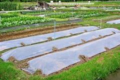 Industrie agricole Image libre de droits