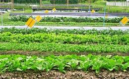 Industrie agricole Images libres de droits