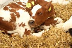Industrie d'agriculture, élevage Images libres de droits