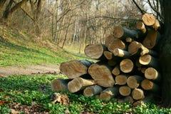 Industrie de bois de charpente, identifiez-vous en bois la forêt image libre de droits