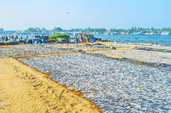 Industrie de poissons dans Negombo Photo stock