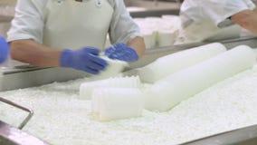 Industrie de production de fromage Les travailleurs de laiterie se ferment vers le haut de pr?parer la p?te crue de fromage dans  clips vidéos