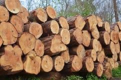 Industrie de travail du bois Photographie stock