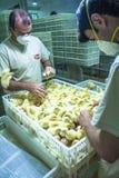 Industrie de volaille Image stock