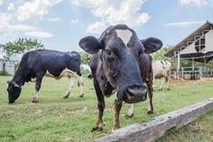 Industrie laitière Images stock