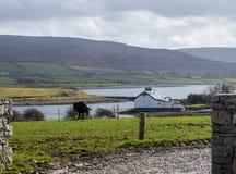 Industrie laitière au rivage Flaggy, Irlande Photo libre de droits