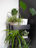 Industrieel grijs die karretje met verschillende groene houseplants wordt gevuld die tot een binnen verticale tuin leiden stock foto