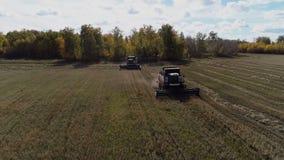 Industrieel maaidorsers oogstend tarwe bij de herfstgebied stock footage