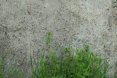 industriell bakgrund Grönt gräs som växer från botten av arkivfoto