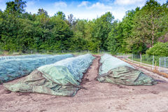 Industriell composting royaltyfri bild