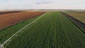 Industrielle Landwirtschaftsluftvideoaufnahmen 4K: Bewässerung des Feldes im Sommer Brummenschuß, Landwirtschaft an der Dämmerung