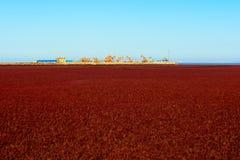 Industrielle Maschine der Ölpumpen-Ölplattform-Energie in suaeda Gras lizenzfreies stockfoto
