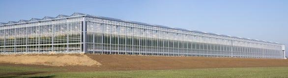 Industrielles Tomatengewächshaus Stockbild
