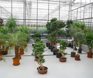 industriellt drivhus Arkivfoto