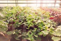 Industriellt grönt hus med växter i krukor royaltyfri fotografi