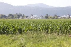 Industry and Agricultural Land Stock Images