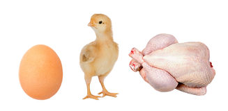 Industry chicken Stock Images
