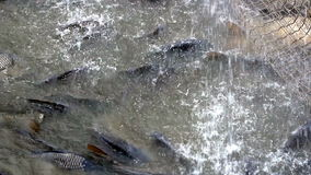 Industry for freshwater fish farming stock video footage