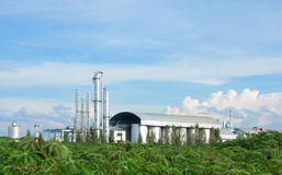 Industry  Tapioca Stock Image