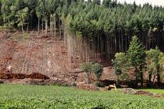 在山腰的采伐的industryPine 库存照片