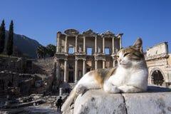 Indyczy Izmir Ephesus Antyczny miasto i kot obraz royalty free