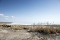 Indyczy Jeziorny Tuz Salt Lake zdjęcia royalty free