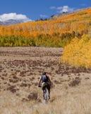 indyjski Colorado lato Obraz Stock