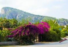 indyk Kemer góry tureckie ulica na tle m Obrazy Royalty Free