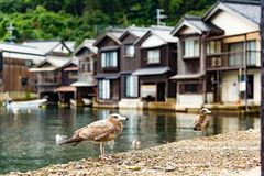 Ine-cho in Kyoto and seagull stock images