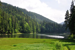 Pine forest above smooth surface of lake Synevyr Royalty Free Stock Photo