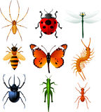Ine Insects icons set  illustration collection. 9 Colorful insects icons, with Ladybug, Bee, Dragonfly, Ant, Centipede, Butterfly, Spider, Grasshopper and Stock Photo