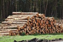 Ine trees log trunks Stock Photos