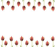 Ine of  tulips for borders, frames etc Royalty Free Stock Images