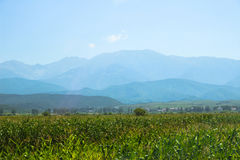 Inear havrefält bergen Royaltyfri Foto