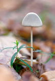 Inedible hazardous to health mushrooms Stock Photography