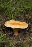 The inedible mushroom Stock Photos